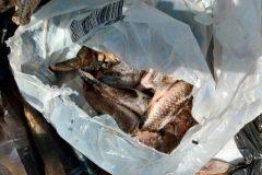 PMA apreende 31 rede 100 kg de carne e 252 kg de pescado ilegal no Rio Meia Ponte-GO 3