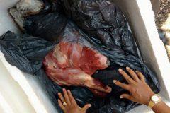 PMA apreende 31 rede 100 kg de carne e 252 kg de pescado ilegal no Rio Meia Ponte-GO 5