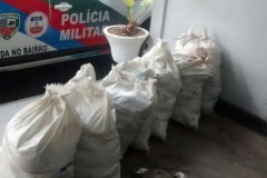 PMA apreende 360 kg de aruna pescados no defeso em Manaus-AM 2