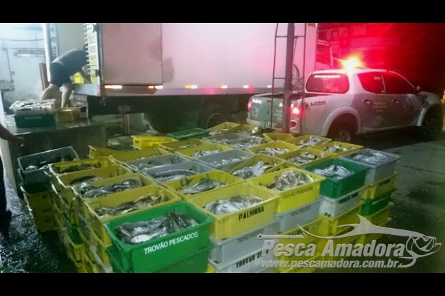 PMA apreende 4 toneladas de pescado ilegal em area restrita em Guaruja-SP 2
