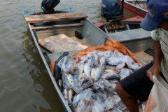 pma-apreende-413-kg-de-pescado-ilegal-e-aplica-r-24-mil-em-multas-no-ms