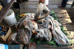 pma-apreende-413-kg-de-pescado-ilegal-e-aplica-r-24-mil-em-multas-no-ms-3