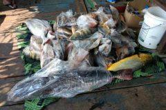 pma-apreende-413-kg-de-pescado-ilegal-e-aplica-r-24-mil-em-multas-no-ms-4