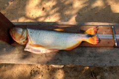 pma-apreende-413-kg-de-pescado-ilegal-e-aplica-r-24-mil-em-multas-no-ms-7