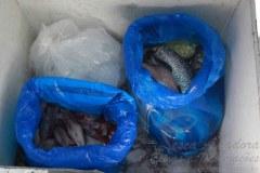 PMA apreende 44kg de pescado ilegal no lago da Usina de Machadinho em SC 2