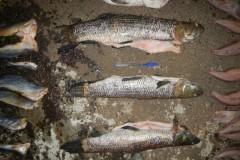 PMA apreende 44kg de pescado ilegal no lago da Usina de Machadinho em SC
