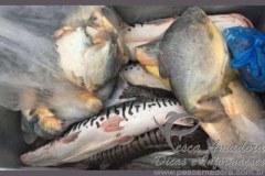 PMA apreende 47kg de pescado ilegal no municipio de Pocone-MT