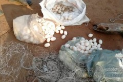 PMA apreende 50 tartarugas e 880 metros de rede em fiscalizacao no TO