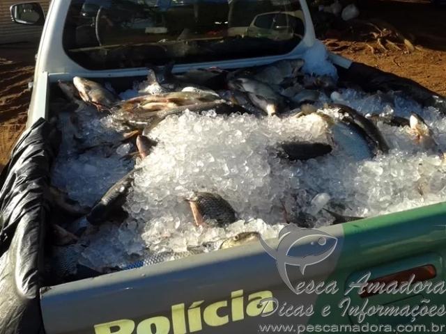 PMA apreende 528 kg de pescado em Rosana-SP