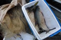PMA apreende 60m de redes e pescado no rio ivai-PR
