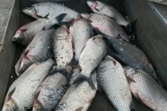PMA apreende 90 kg de pescado e redes no Lago Serra di Facao-GO 2