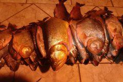 pma-apreende-92-kg-de-pescado-ilegal-e-aplica-r-2-800-em-multas-em-campo-grande-ms-2