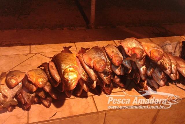 pma-apreende-92-kg-de-pescado-ilegal-e-aplica-r-2-800-em-multas-em-campo-grande-ms