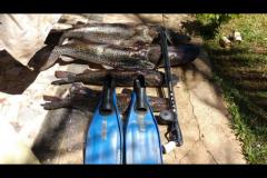 PMA apreende 93 kg de pintados e arbalete em ranchos no Rio Parana em Rosana-SP