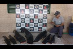 PMA apreende 93 kg de pintados e arbalete em ranchos no Rio Parana em Rosana-SP 3