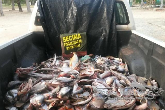 PMA apreende 98 kg de pescado ilegal e animais silvestres no Vale do Araguaia
