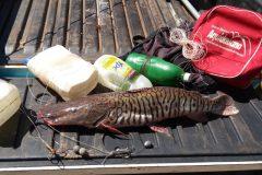 pma-apreende-anzol-de-galho-e-pescado-ilegal-durante-fiscalizacao-no-rio-aquidauana-em-ms
