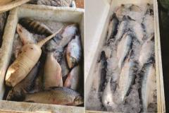 PMA apreende cerca de 200 kg de pescado armazenados de forma ilegal no Tocantins