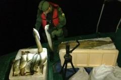 PMA apreende embarcacao com 380 kg de pescado ilegal no Amazonas 3