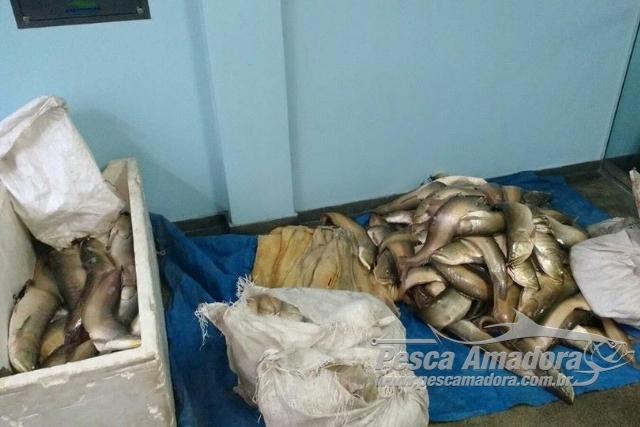 PMA apreende embarcacao com 380 kg de pescado ilegal no Amazonas 5
