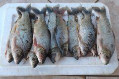 pma-apreende-homem-transportando-pescado-ilegal-do-rio-aquidauana-ms