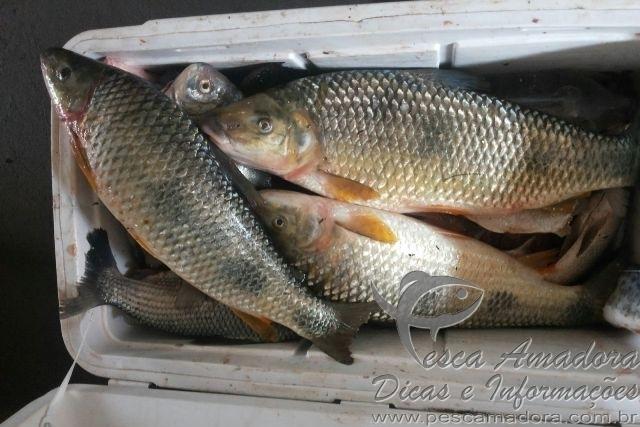PMA apreende material de caca e pesca em Ivaipora-PR