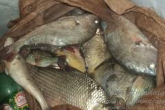 PMA apreende pescado e 400 metros de redes no Rio Pardo-MS