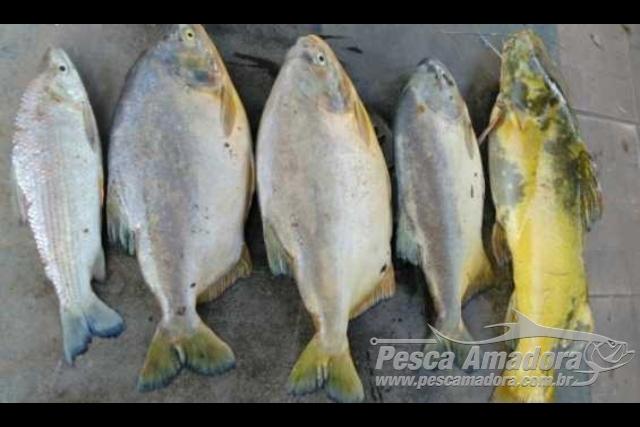 PMA apreende pescado e autua pescador por pesca ilegal no Rio Aquidauana-MS