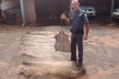 PMA apreende pescado e redes de pesca ilegal no Rio Tres Pontes no interior de SP 2