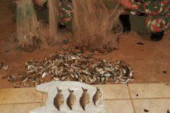 PMA apreende pescado fora da medida e tarrafas e prende quatro por pesca ilegal em MS 2