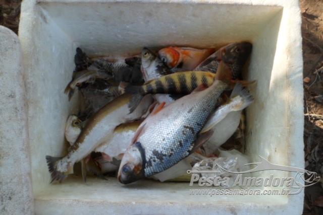 PMA apreende pescado ilegal e 250 m de redes no Tocantins 2