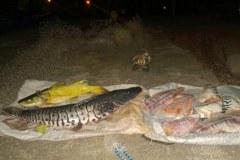 PMA apreende pescado ilegal e redes de pesca no Rio Aquidauana-MS
