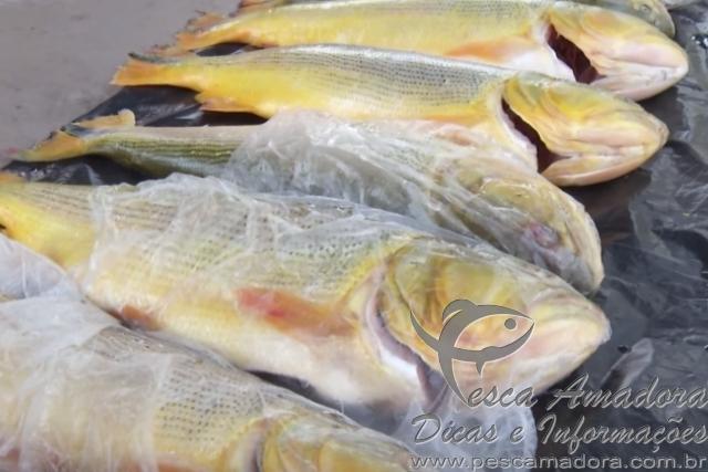 PMA apreende pescado ilegal em Rondonopolis-MT 3