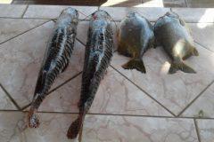 PMA apreende pescado ilegal no Rio Aquidauana-MS