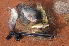 pma-apreende-redes-arbalete-e-pescado-ilegal-durante-fiscalizacao-no-rio-verdinho-go