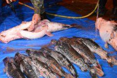 pma-apreende-redes-de-pesca-e-80-kg-de-pescado-ilegal-apos-denuncia-no-mt-2