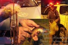 PMA apreende redes de pesca em Marilia-SP