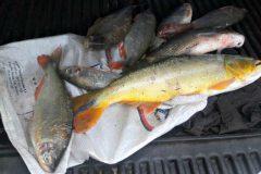 pma-apreende-redes-e-7-kg-de-pescado-ilegal-no-vale-do-prata-em-mato-grosso-2