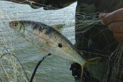 pma-apreende-redes-e-pescado-ilegal-apos-denuncia-no-lago-de-itaipu-no-parana-3