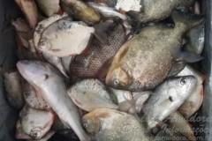 PMA apreende redes e pescado ilegal em rios de MS