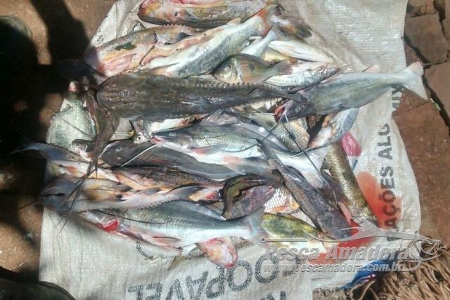 PMA apreende redes e pescado ilegal no Lago de Itaipu-PR 4