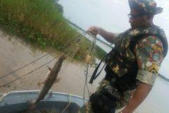 pma-apreende-redes-espinheis-anzois-de-galho-e-liberta-30-kg-de-pescado-no-rio-parana-ms