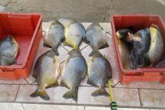 PMA apreende tres pessoas e 45 kg de pescado ilegal abaixo da medida em MS 2