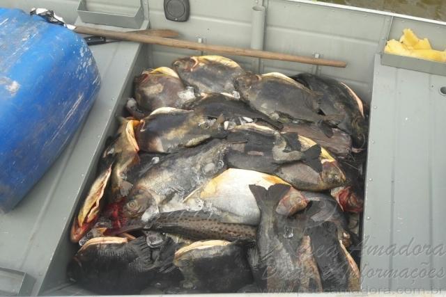 PMA apreendem 130 kg de pescado capturados irregularmente em MS 2