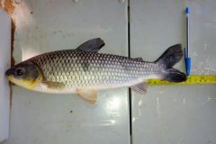 PMA autua dois por pesca ilegal em Mato Grosso do Sul 3