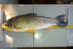 PMA autua dois por pesca ilegal em Mato Grosso do Sul 4