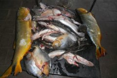 pma-autua-dois-por-transporte-ilegal-de-pescado-no-rio-miranda-ms