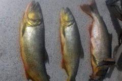 pma-autua-homem-por-pesca-ilegal-proximo-a-usina-do-funil-em-ribeirao-vermelho-mg
