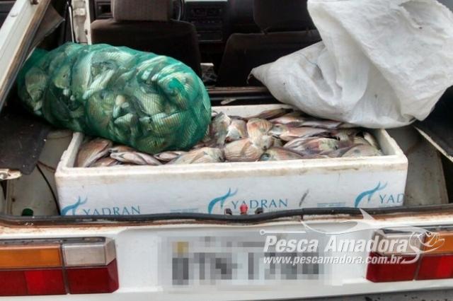 pma-autua-mulher-em-r-4-mil-e-apreende-70-kg-de-pescado-ilegal-no-rio-tiete-sp