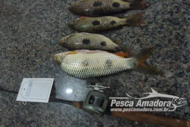 pma-autua-pescador-amador-por-falta-de-licenca-ambiental-em-ms